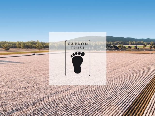 Perchè scegliere il cotone organico: riduzione della carbon footprint