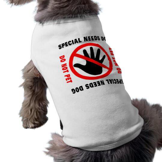 t shirt per cani piccola taglia