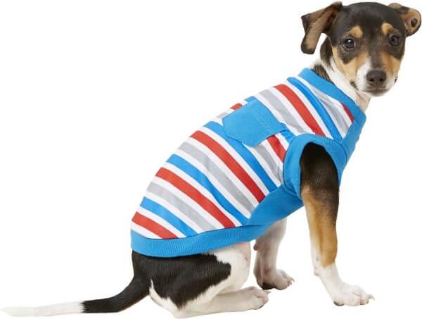 t shirt per cani