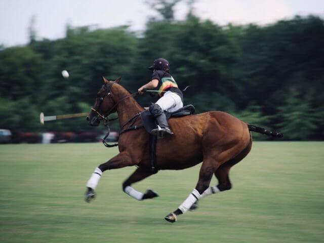 La polo donna perfetta per equitazione? Quella personalizzata!