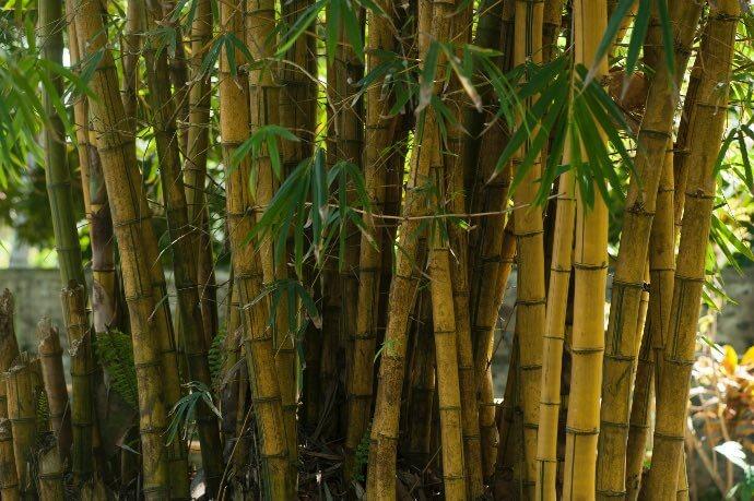 magliette eco friendly in viscosa di bamboo
